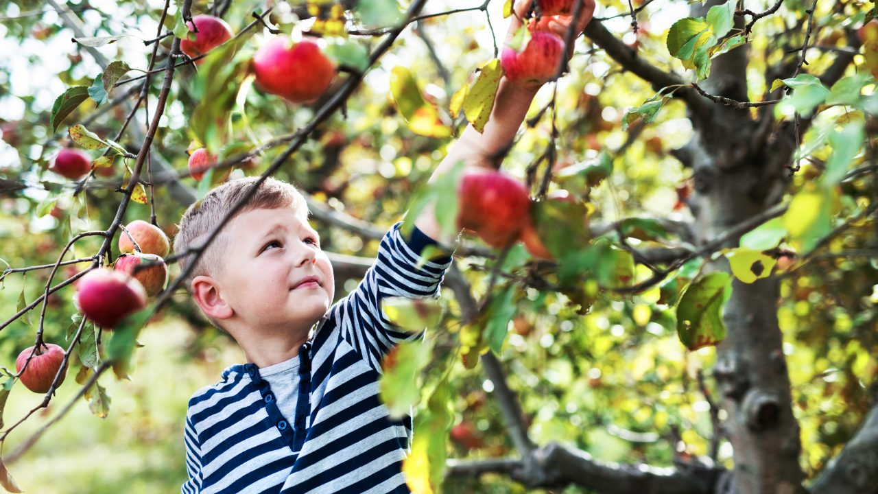 https://agritourismreview.com/wp-content/uploads/2018/03/a-small-boy-picking-apples-in-orchard-3RN64GS-1280x720.jpg