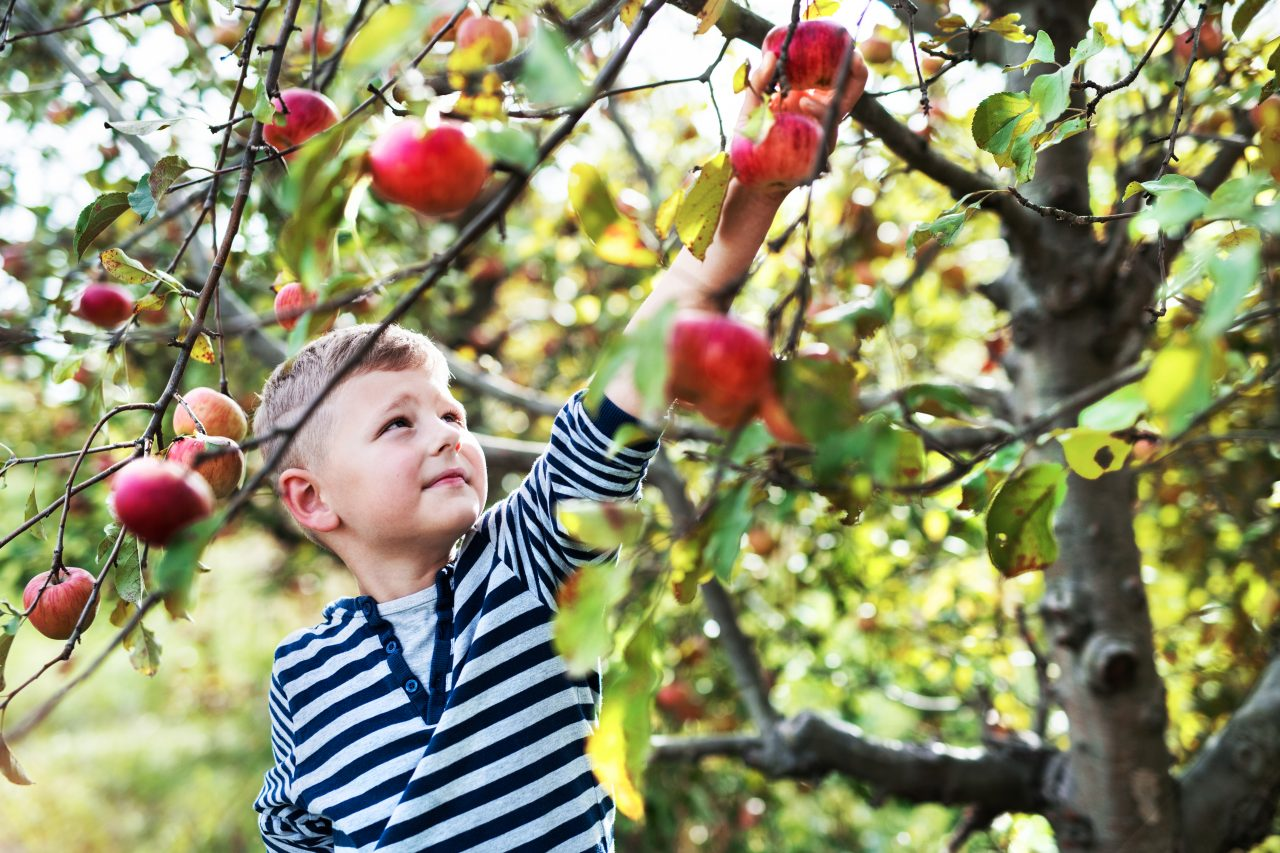 https://agritourismreview.com/wp-content/uploads/2018/03/a-small-boy-picking-apples-in-orchard-3RN64GS-1280x853.jpg