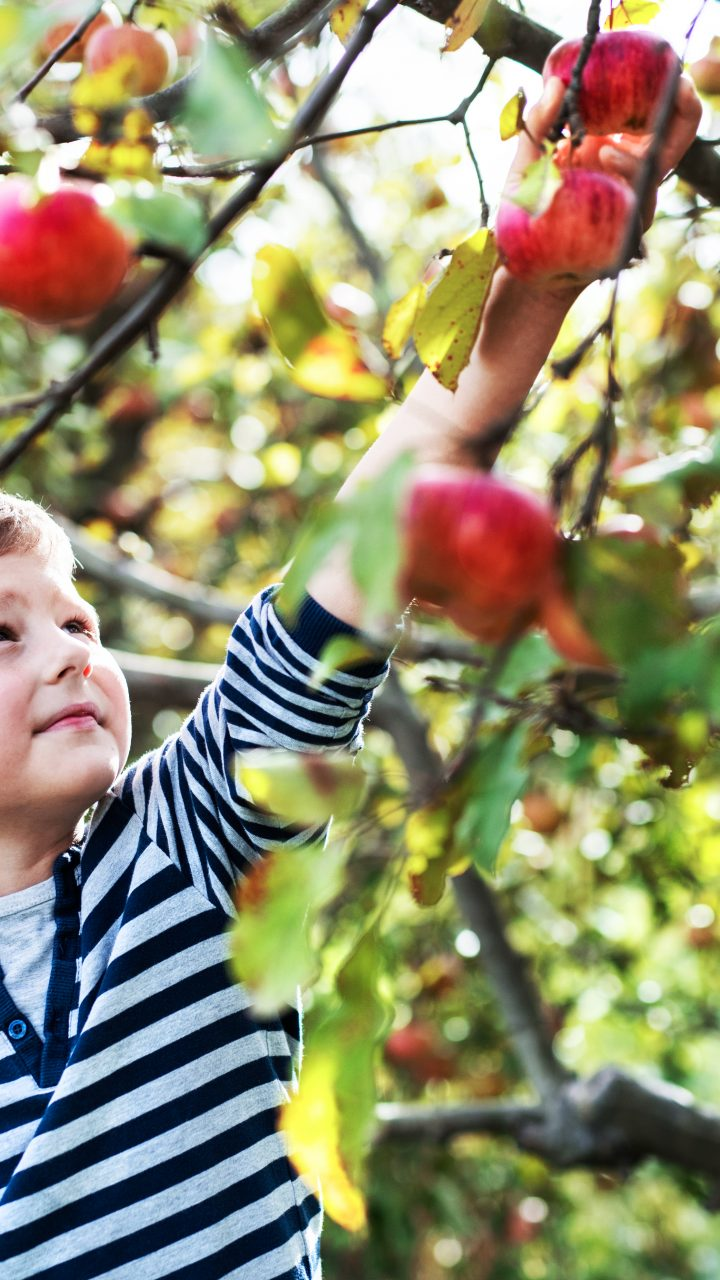 New York Governor Issues Guidance for Agritourism
