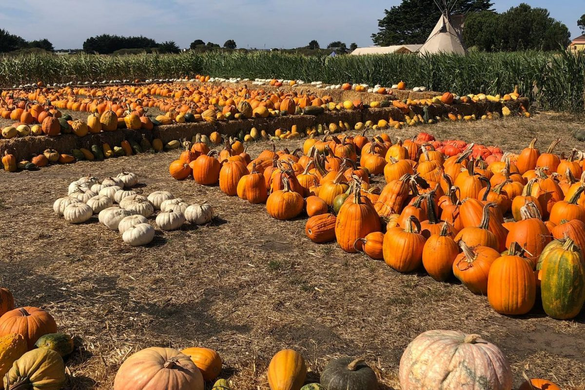 Some Pumpkin Events OPT to Cancel
