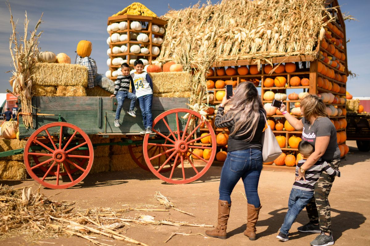Are Farm Parks the new Theme Parks?