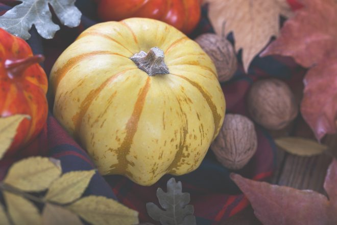 Top 10 Places for Pumpkins This Fall